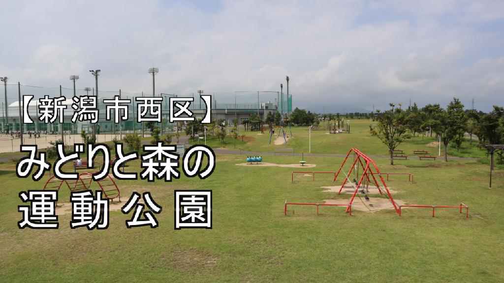 みどりと森の運動公園の写真