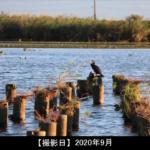 福島潟の潟・鳥の写真