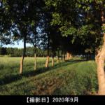 福島潟の林の写真