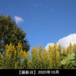 草花の写真