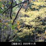 猿毛岳の紅葉写真