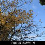 猿毛岳の山頂 写真