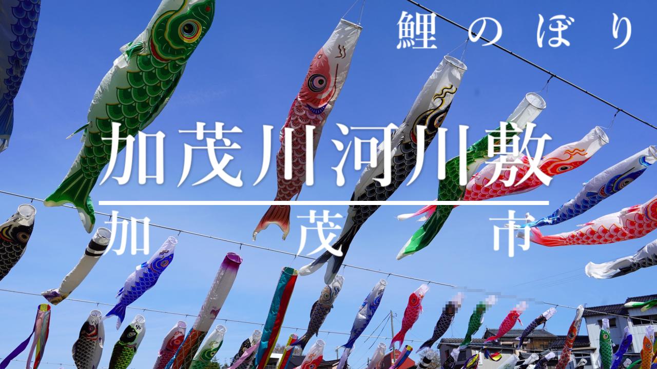 加茂川河川敷の鯉のぼりの写真