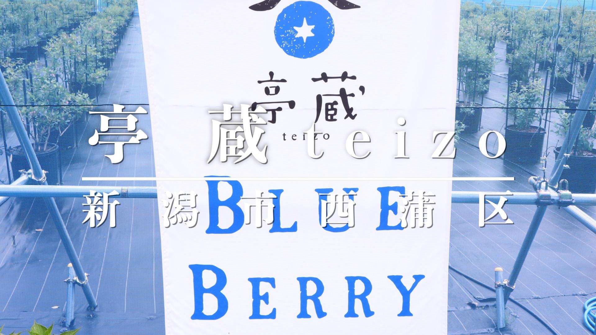 亭蔵(teizo)BLUE BERRYアイキャッチ